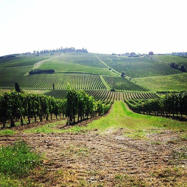 vinhedos Toscana