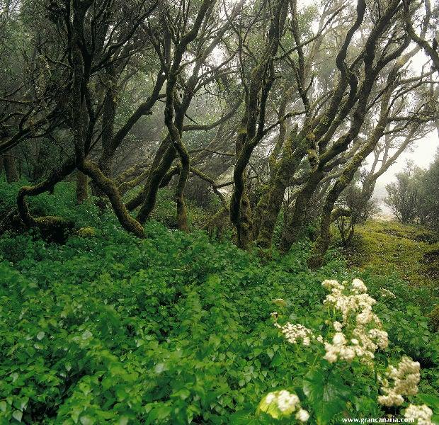 Natureza Gran Canaria