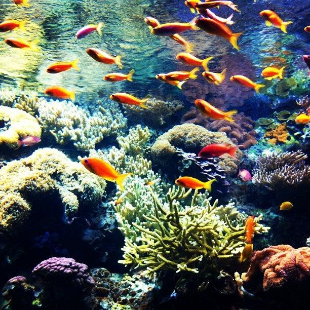 oceanografico visitare lisbona edreams blog di viaggi