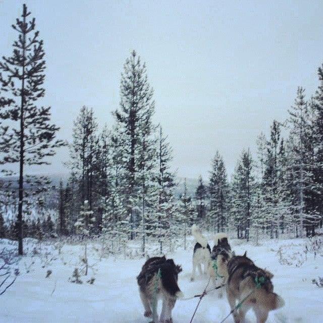 Trineo de huskies en Rovaniemi, Laponia