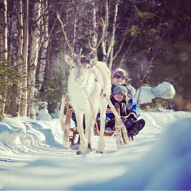 Trineo de renos en la ciudad de Papá Noel