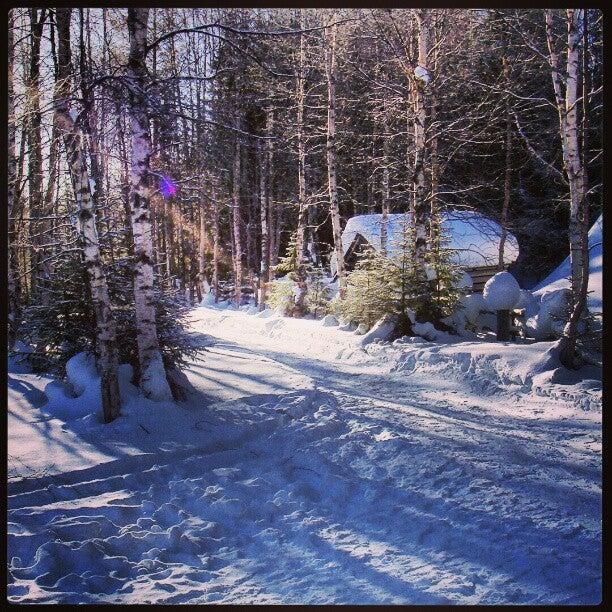 Bosque finlandés Auttikongas, Laponia