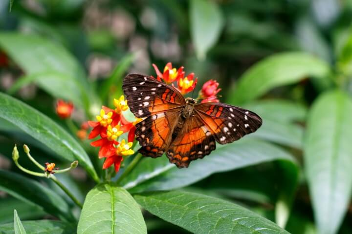 Casa das borboletas em viena - áustria