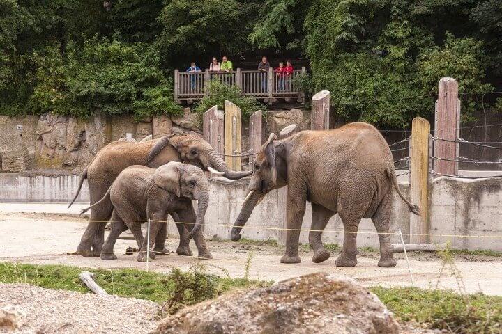 Tiergarten Schönbrunn zoo em viena - áustria
