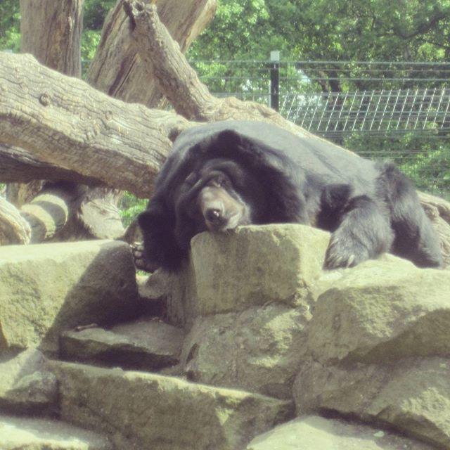 zoo Berlim