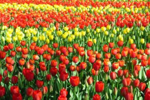 Os melhores lugares a visitar durante a Primavera