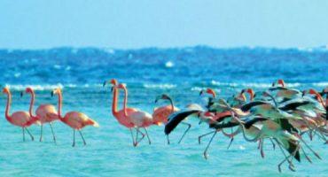 Porque deves viajar às Bahamas?