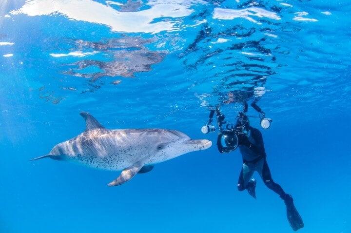 golfinhos em bahamas