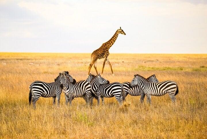Serengeti, Tanzânia