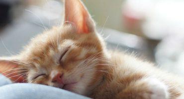 Como cuidar do teu animal de estimação durante as férias: dicas e conselhos úteis