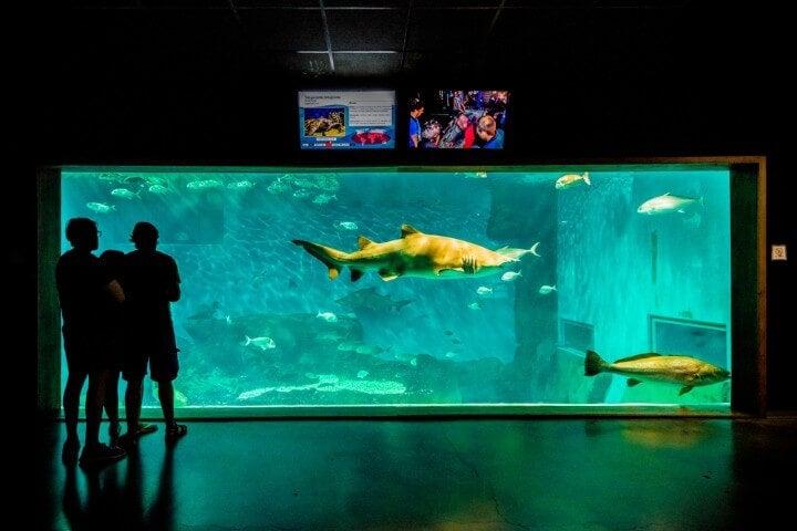aquario de sevilha