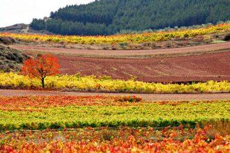 La Rioja durante o Outono