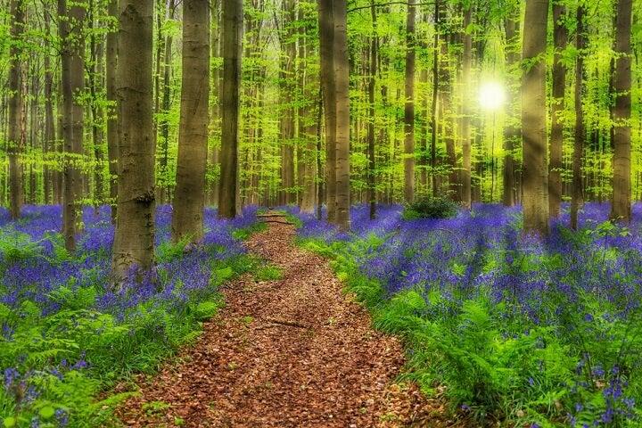 Hallerbos – Bélgica - Primavera