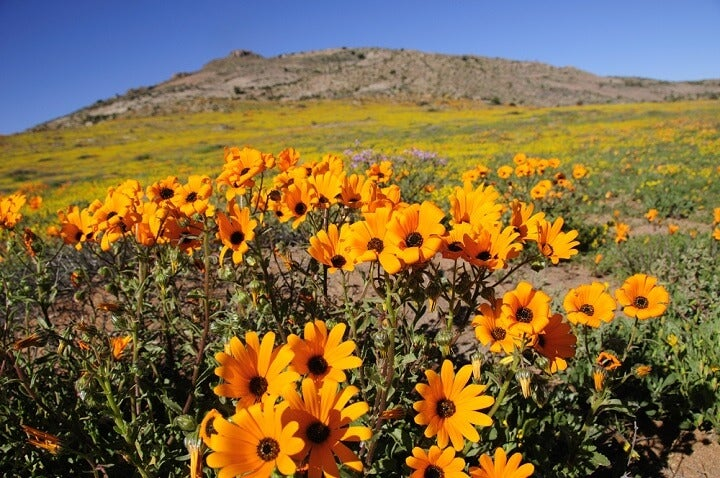 Namaqualand - áfrica do sul