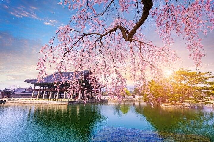 Seoul - coreia - primavera