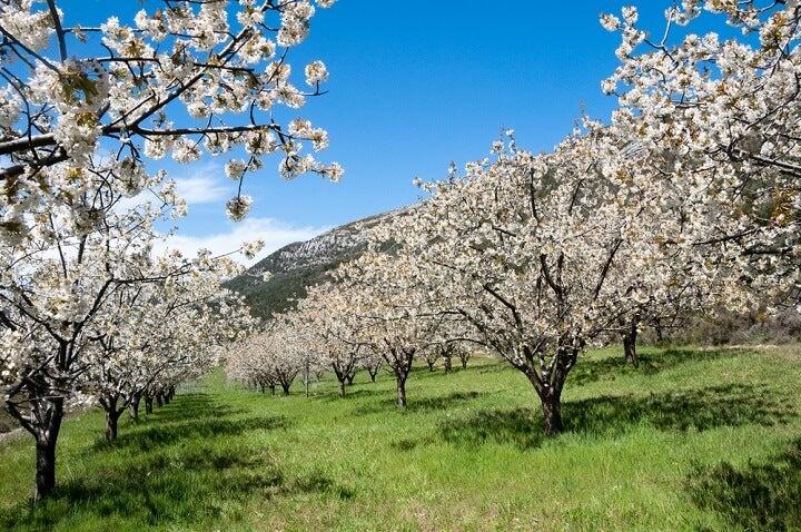 Vale de Jerte - Espanha - Primavera