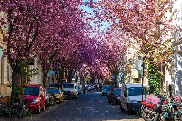 bonn - alemanha - primavera