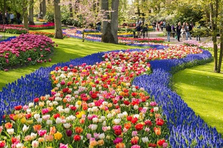 jardim Keukenhof - amesterdão - primavera