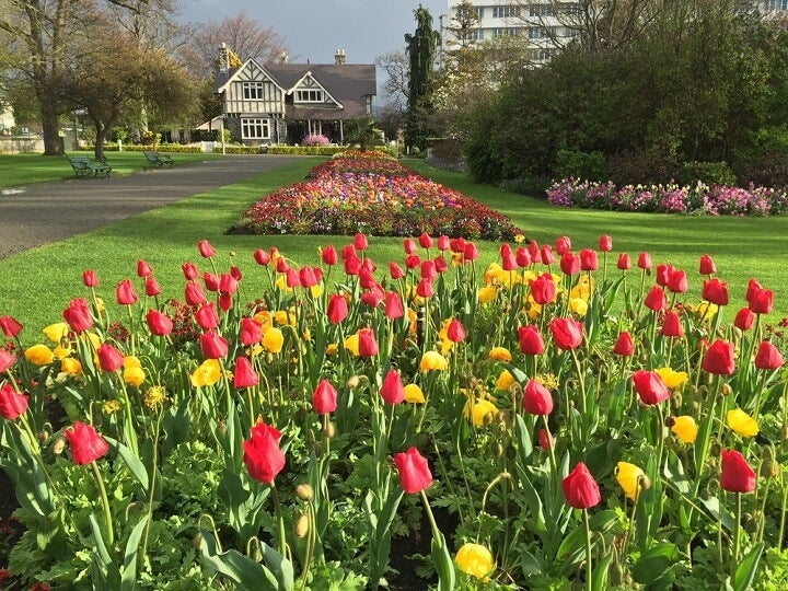 jardim botanico Christchurch - Primavera