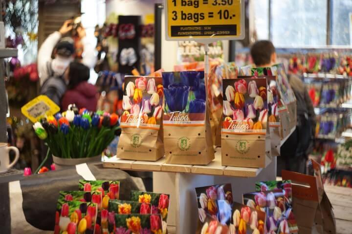 sementes tulipas em amesterdão - holanda